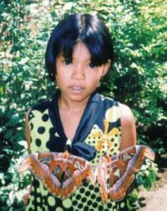 Vielen tropischen orchideen und schmetterlingen dort können sie auch